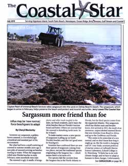 Sargassum more friend than foe.